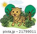 野生動物 ヒョウ 21799011