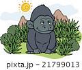 野生動物 ゴリラ 21799013