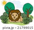 野生動物 ライオン 21799015
