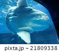 八景島シーパラダイス 21809338