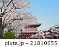 浅草の浅草寺宝蔵門と満開の桜 21810655