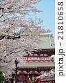 浅草の浅草寺宝蔵門と満開の桜 21810658