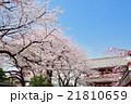浅草の浅草寺宝蔵門と満開の桜 21810659