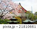 浅草の浅草寺と満開の桜 21810661