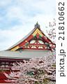 浅草の浅草寺と満開の桜 21810662