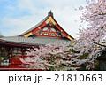 浅草の浅草寺と満開の桜 21810663