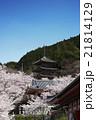 奈良の春 桜風景 青空バック 21814129