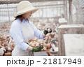 養鶏 女性 21817949