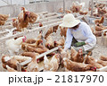 養鶏 女性 21817970