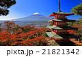 桜紅葉 富士山 風景の写真 21821342