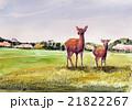 奈良公園 鹿と東大寺のスケッチ 21822267