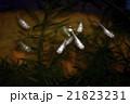 ニホンメダカ 魚 淡水魚の写真 21823231