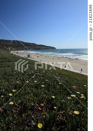 西海岸のビーチ 21823896