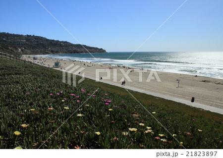 西海岸のビーチ 21823897