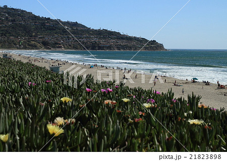 西海岸のビーチ 21823898
