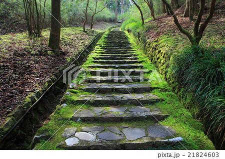 恩賜箱根公園 二百階段 21824603