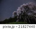 乙ヶ妻のシダレザクラと北斗七星 21827440