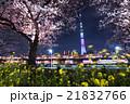 隅田公園 東京スカイツリー 桜の写真 21832766
