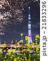 隅田公園 東京スカイツリー 桜の写真 21833296