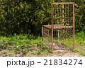 イノシシ対策 21834274