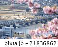 小田急線 河津桜 松田山  21836862