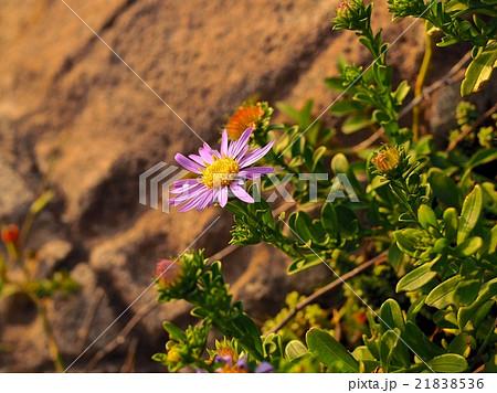 断崖に咲く花 21838536
