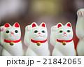 招き猫 21842065