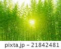 竹 竹林 林の写真 21842481