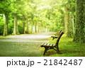 並木道 ベンチ 新緑の写真 21842487