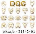 犬 / アイコン 21842491