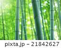 竹 竹林 植物の写真 21842627