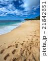ハワイのビーチ 21842651