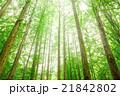 メタセコイア 森林 風景の写真 21842802