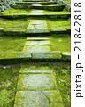 苔 石畳 日本庭園の写真 21842818