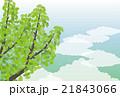 背景素材-夏イメージ,銀杏(ヨコ1) 21843066