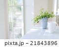 テーブルに置かれた観葉植物 21843896