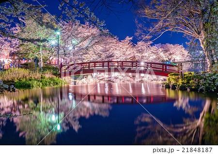 臥竜公園の桜の写真素材 [218481...