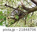 鳥の巣 21848706
