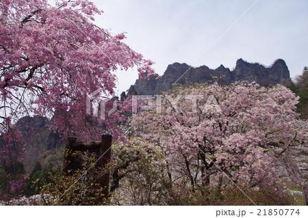 群馬県立森林公園さくらの里 21850774