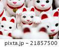 豪徳寺の招き猫(東京の風景) 21857500