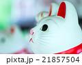 豪徳寺の招き猫(東京の風景) 21857504