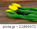 Beautiful Yellow tulips on Wood Background 21860472