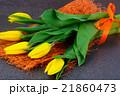 Beautiful Yellow tulips on Dark Background 21860473
