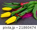 Beautiful Yellow tulips on Dark Background 21860474