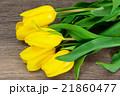 Beautiful Yellow tulips on Wood Background 21860477