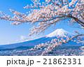 富士山と満開の桜 21862331