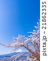 富士山と満開の桜 21862335