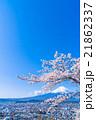 富士山と満開の桜 21862337
