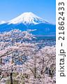 富士山と満開の桜 21862433