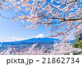 富士山 桜 満開の写真 21862734